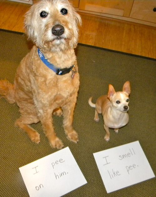 Dog Shame Pair Bad Dog Humor Dog Shaming Dog Shaming Funny