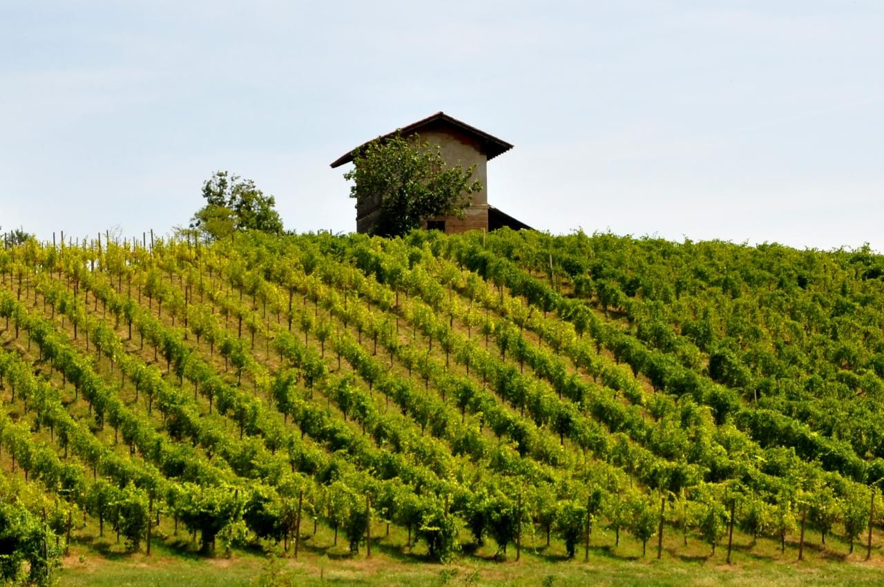 vignobles jurassiens, Franche-Comté