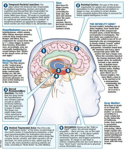 Female Brain. Photo source: New York Post | psychology | Pinterest ...
