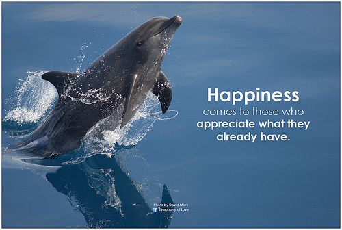 Symphony of Love Happiness comes to those who appreciate what they already have - http://www.fitrippedandhealthy.com/symphony-of-love-happiness-comes-to-those-who-appreciate-what-they-already-have/  #Supplements #Fitness #Weightlosstips #DietTips