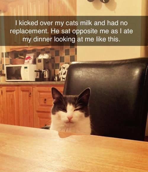 Pin By Crazy Cat Ladies Unite On Kitties Pinterest Cat - 21 photos guaranteed to make you laugh out loud