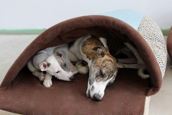 Mit dem Kumpel unter einer Decke.   Hunde, Schlafsack