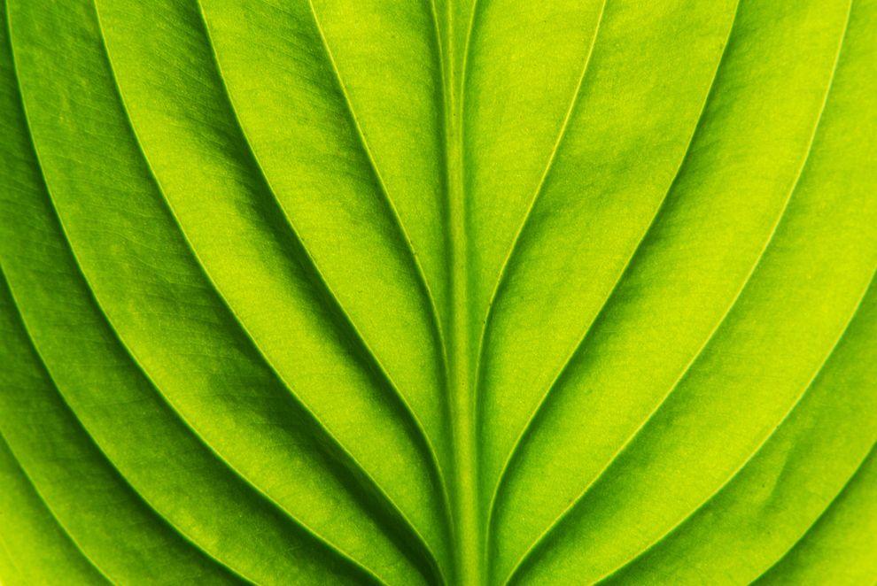 Green Leaf Symmetry Photography Symmetry Art Symmetry Design