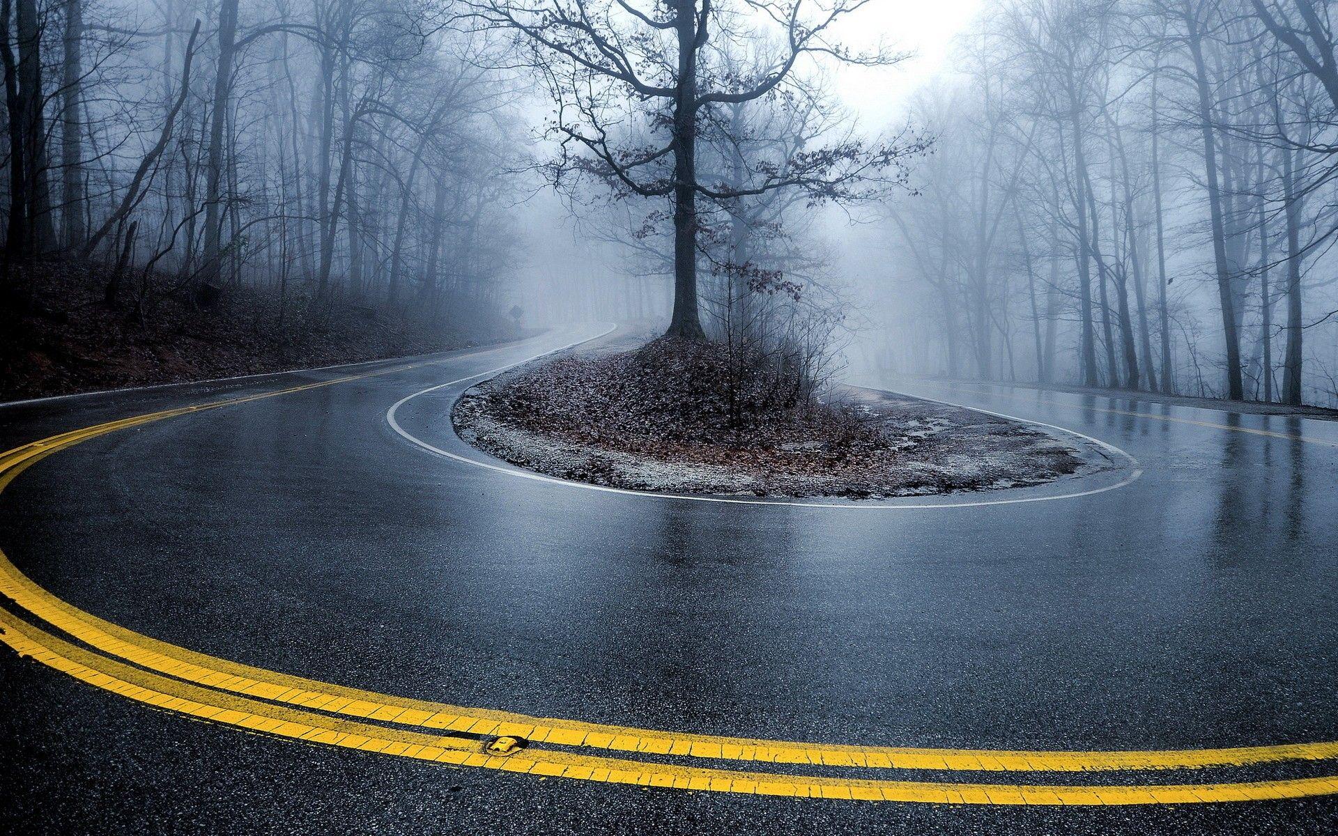 Mist Roads Roadside Turn Wallpaper 2604024 Wallbase Cc Forest Wallpaper Hd Wallpaper Foggy