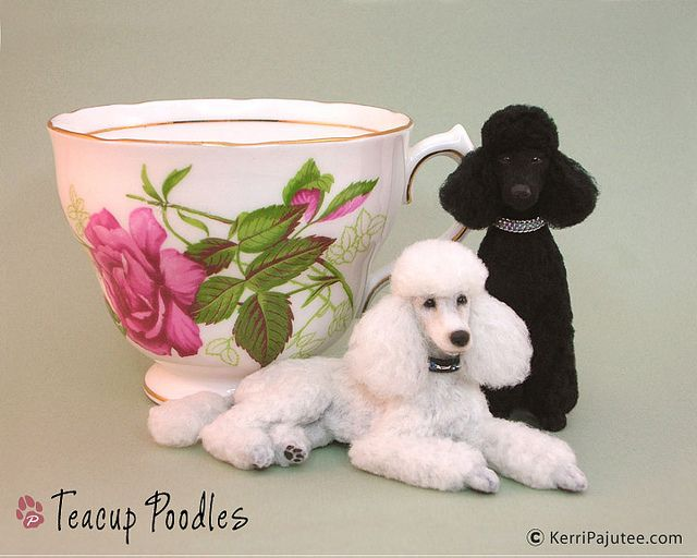 Dollhouse Miniature Standard Poodles | Flickr - Photo Sharing!