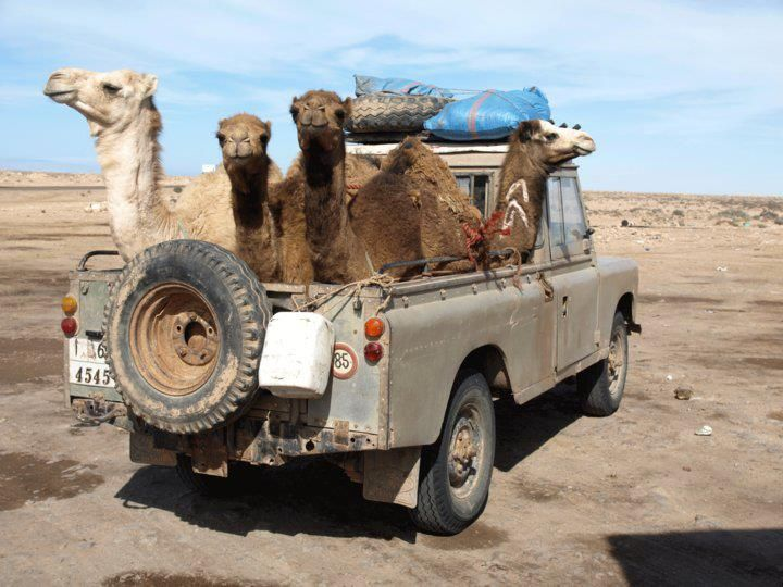 Notice placement of the camel trophy.