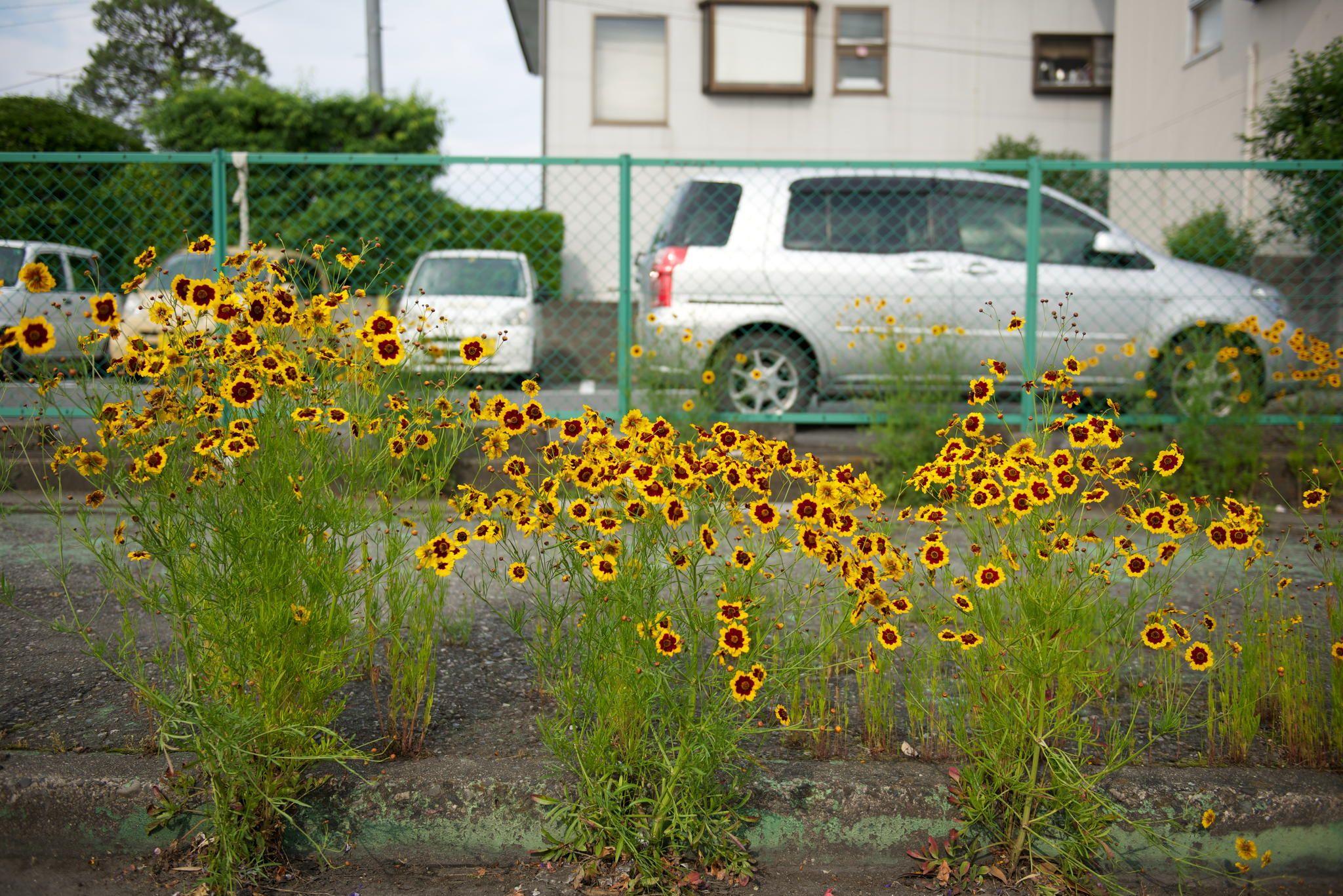 roadside flowers by Tedd Okano on 500px