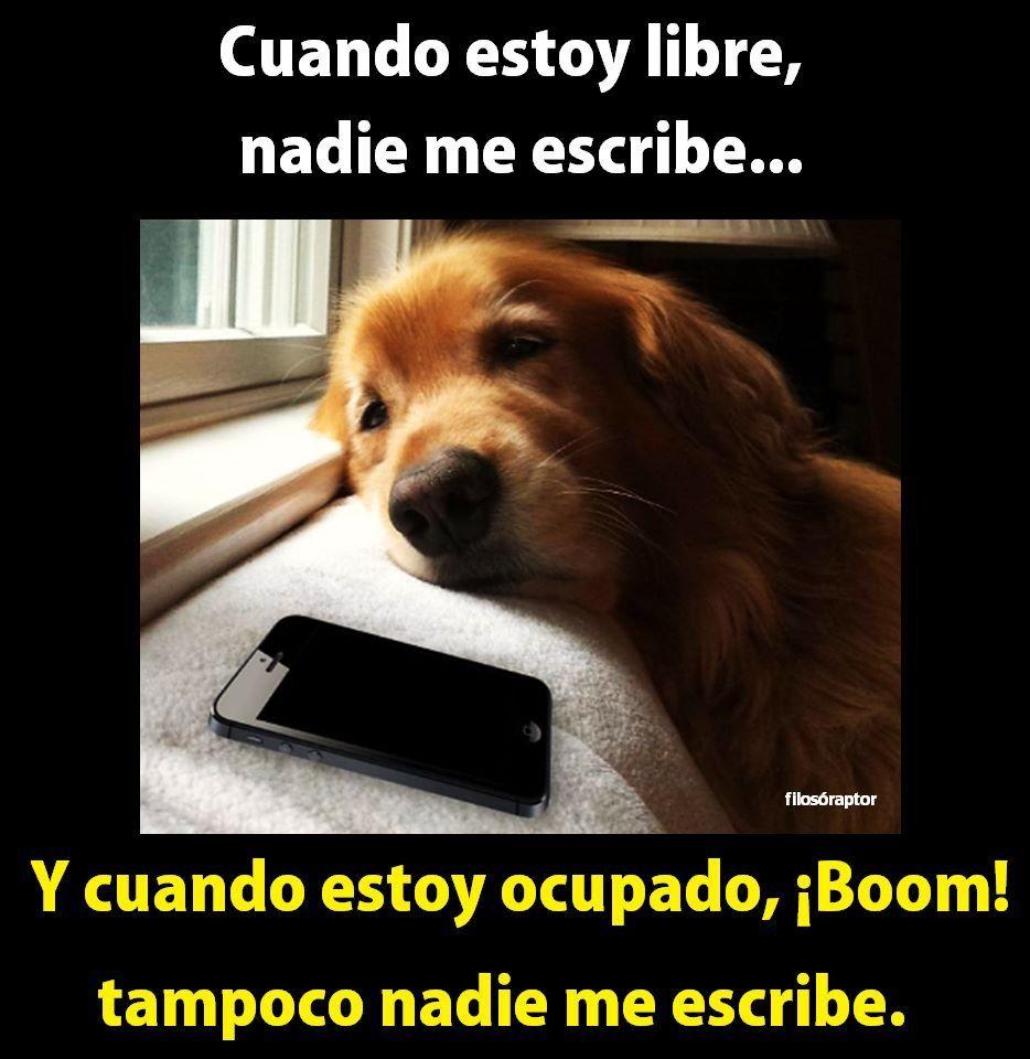 Pin By Ruben On Humor Cute Dog Pictures Golden Retriever Golden Retriever Funny