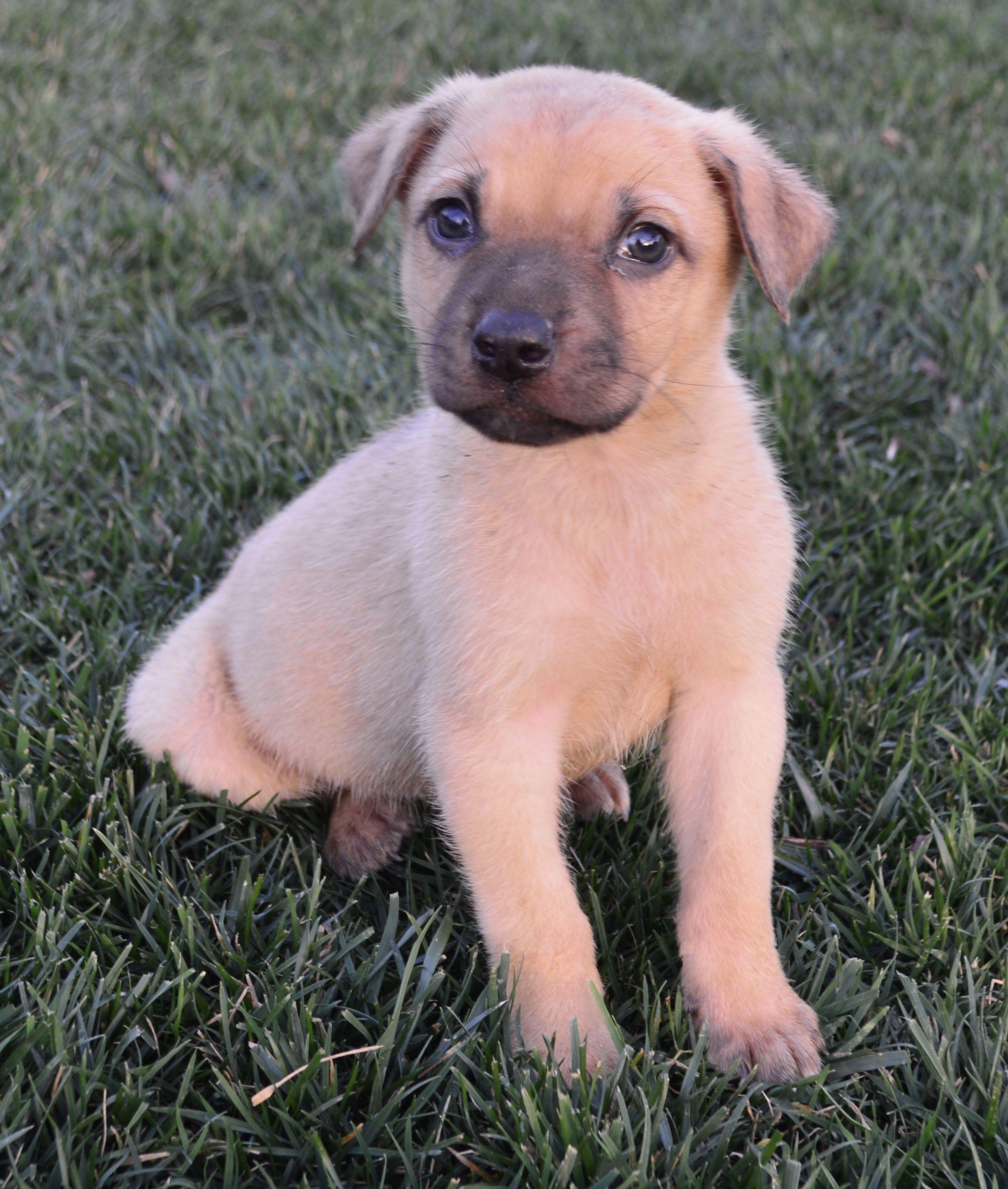 Shug Dog For Adoption In Palo Alto Ca Adn 468549 On Puppyfinder Com Gender Male Age Baby Dog Adoption Dogs Adoption