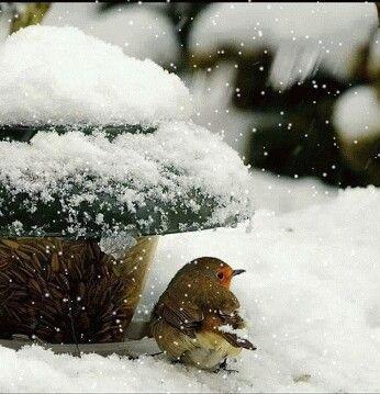 Tiny bird in snow