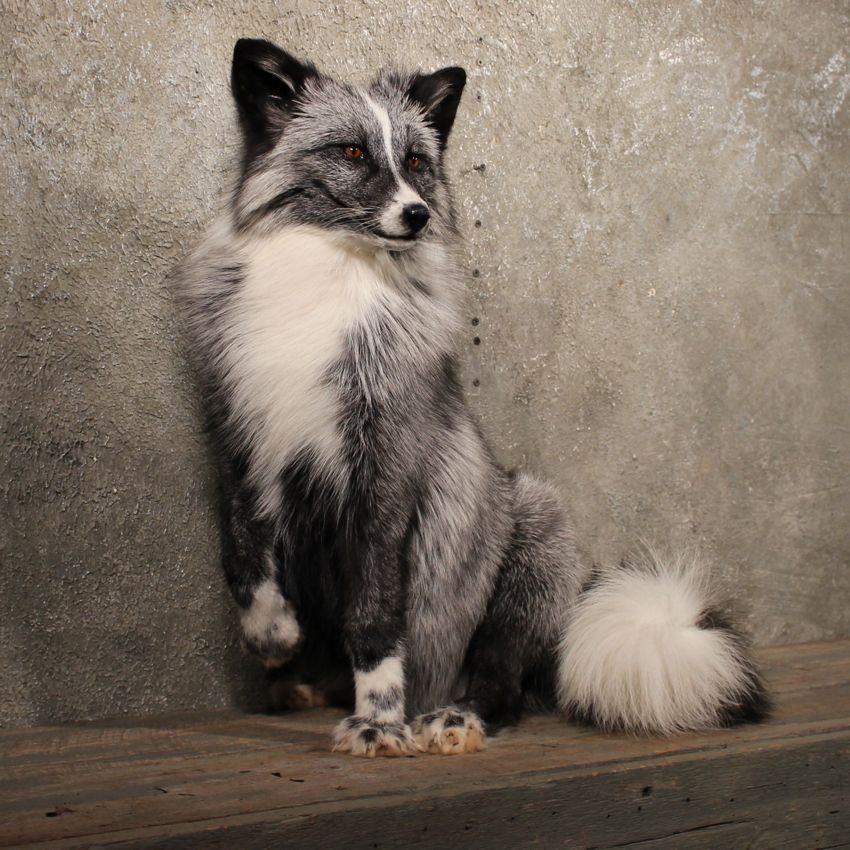 Absolutley Elegant Marble Fox Animation Animaux Animaux Sauvages Animaux Adorables