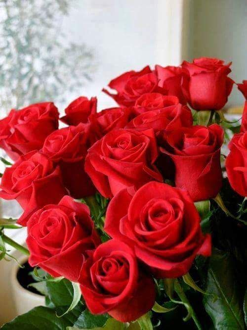 Gify I Obrazki Kwiaty Gify Beautiful Rose Flowers Beautiful Flowers Wallpapers Beautiful Flower Arrangements