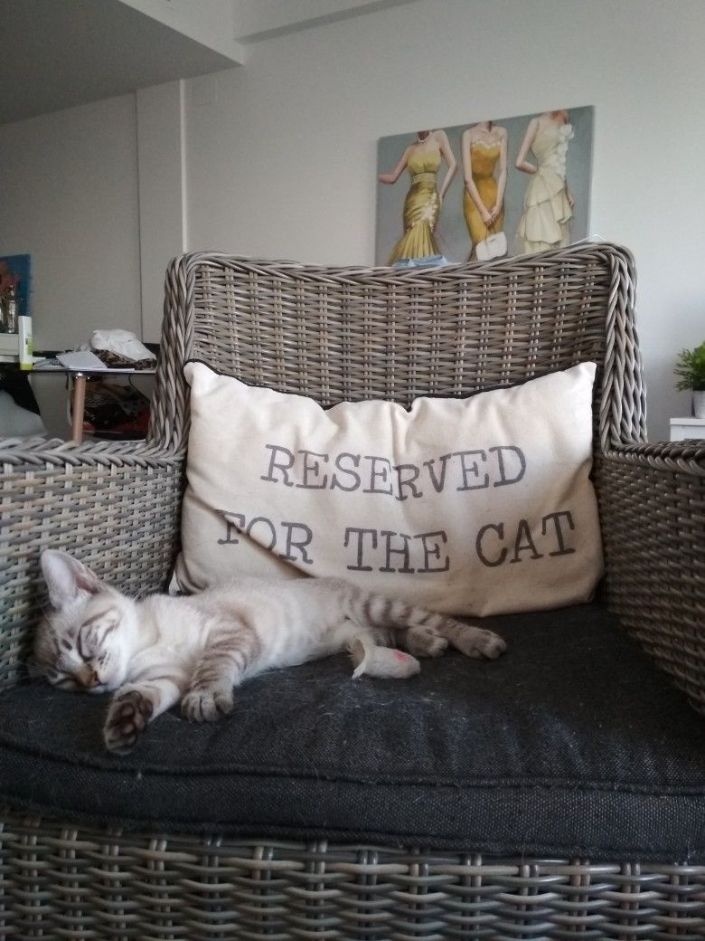 Pin By Ana Almeida On My Home Cute Cats Photos Funny Cute Cats