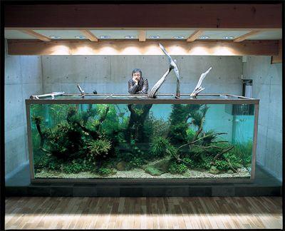 Amazon Blackwater Biotope Nature Aquarium Aquascape Amazing Aquariums