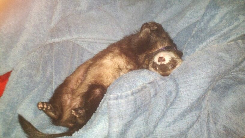 Happy ferret with a slight smile  :-)