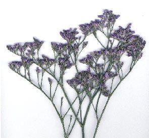 Purple Caspia Bulk Flowers Online Wholesale Flowers Purple Flowers