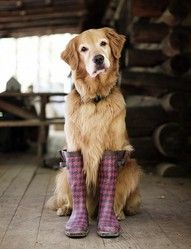 golden rule... be stylish #toocute