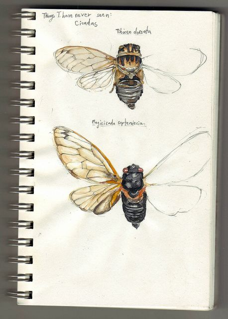 In ancient Greece the cicadas were emblems of immortality and sometimes kept as pets.