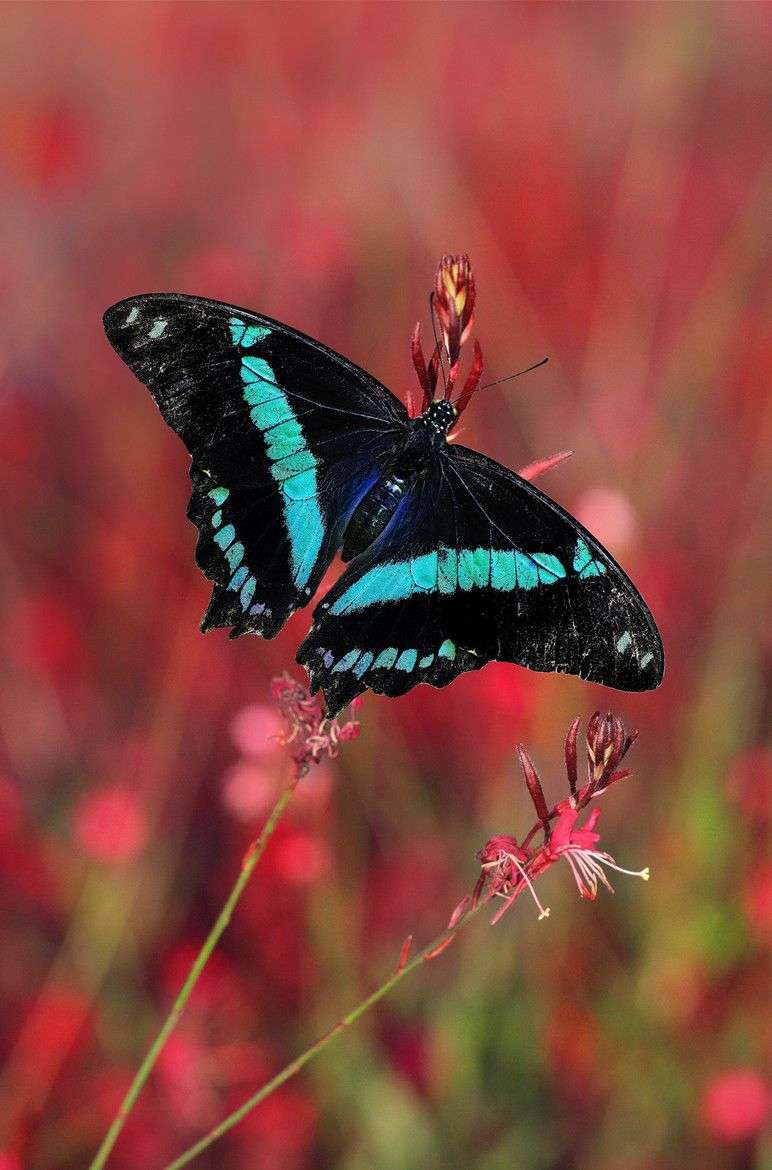 Photograph green banded swallowtail by George Veltchev on 500px
