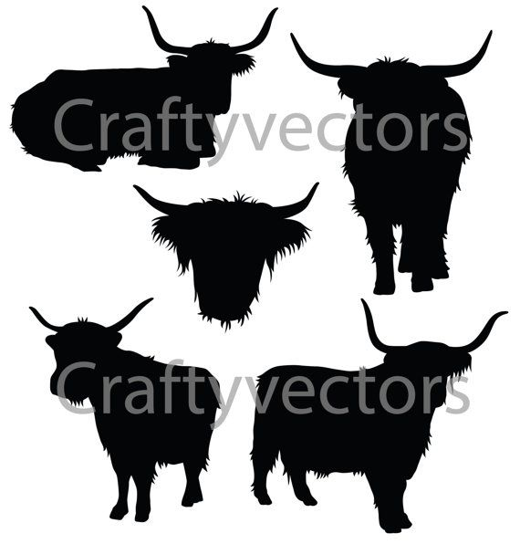 Highland cattle Angus cattle Ox Scotland Live, others transparent  background PNG clipart | HiClipart
