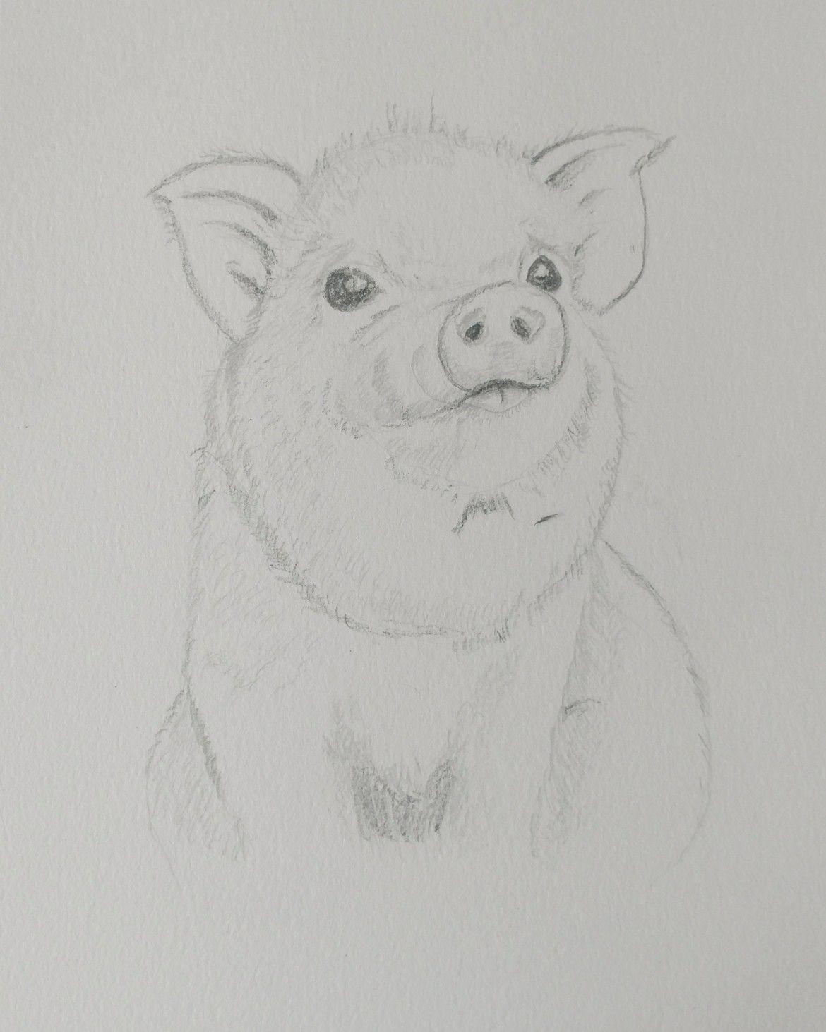 Baby pig pencil in my sketchbook jalbert watercolors drawings