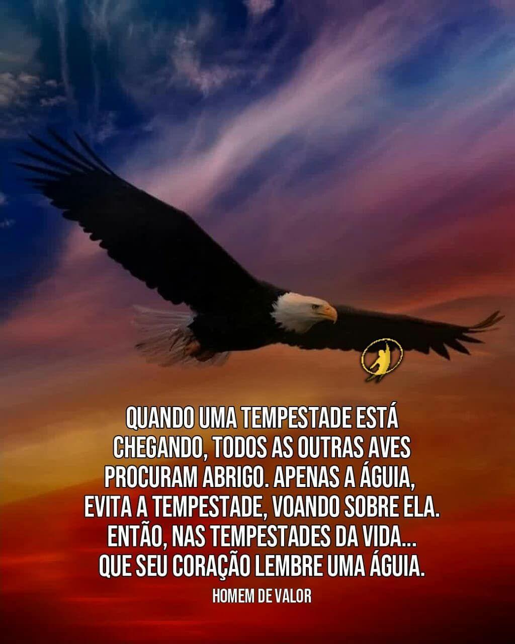 A Imagem Pode Conter Pássaro Céu E Texto Naut10
