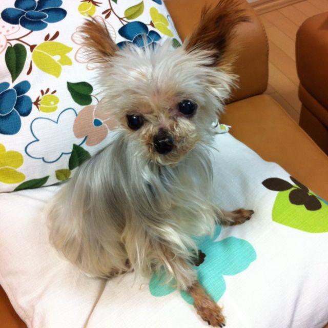 yorkie Yorkie, Dogs, Animals
