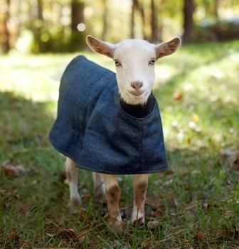 Kid Coat. Nice for late winter early spring kidding. As well as some of those early shows where the barn can be so frigid.