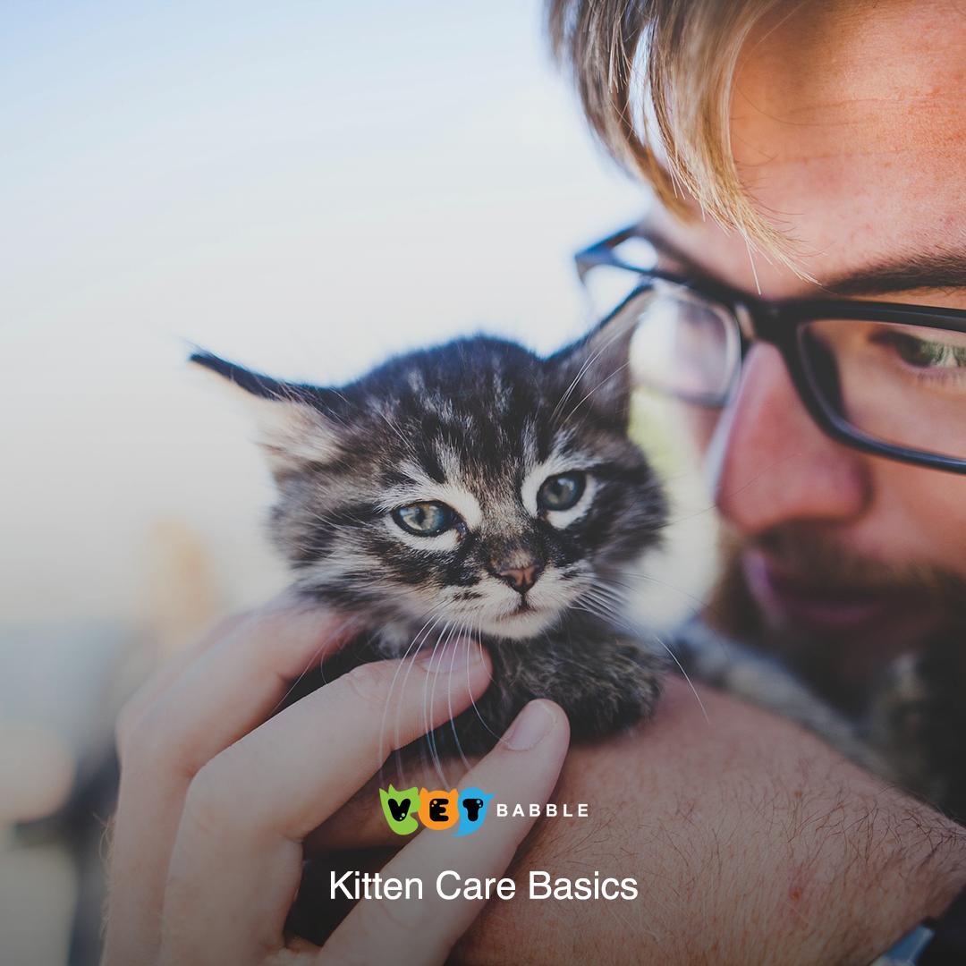 How To Care For A Kitten Kitten Care Basics Vetbabble Kitten Care Kitten Adoption Pet Health Care