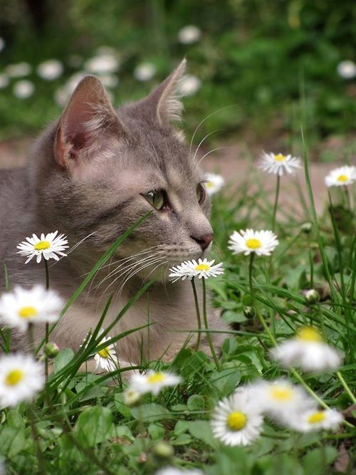 A Country Tom Cat Relaxing In A Field Of Replenished Wild Flowers