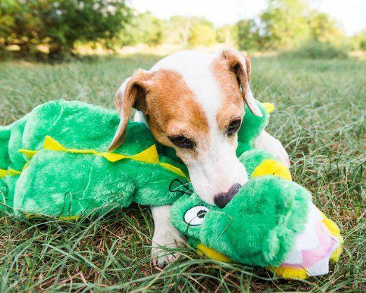 Kyjen Squeaker Mat Zanies Gecko Pet Toys Pressureless Tennis