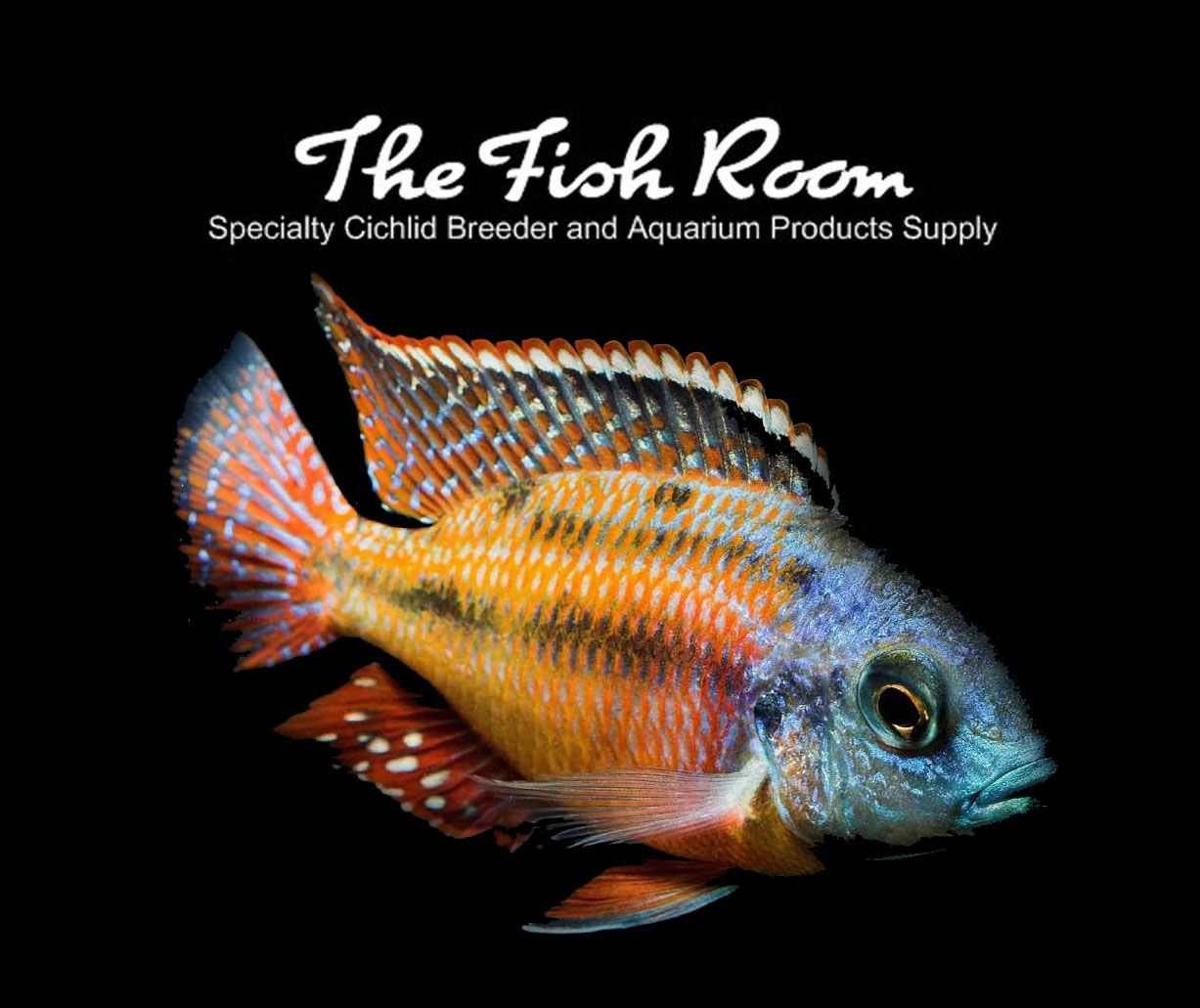 Pin By The Fish Room On The Fish Room Fishing Room Cichlids The Secret