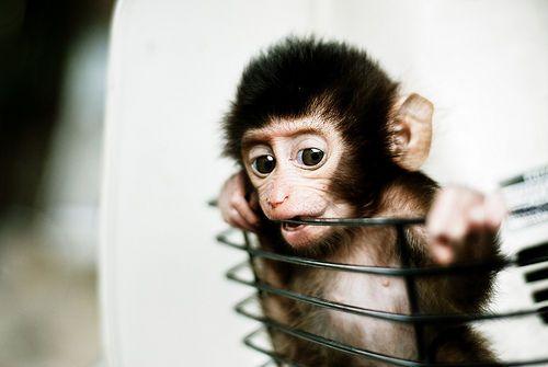 Monkey 3 Cute Baby Animals Cute Baby Monkey Cute Animal Photos