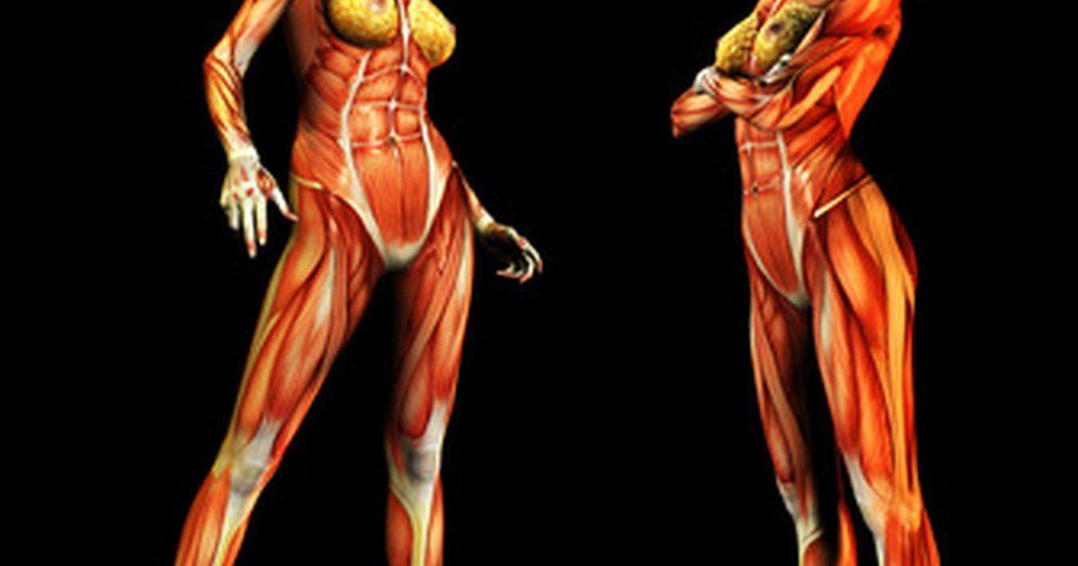 Cuáles son las funciones del músculo sartorio?. El sartorio es uno ...