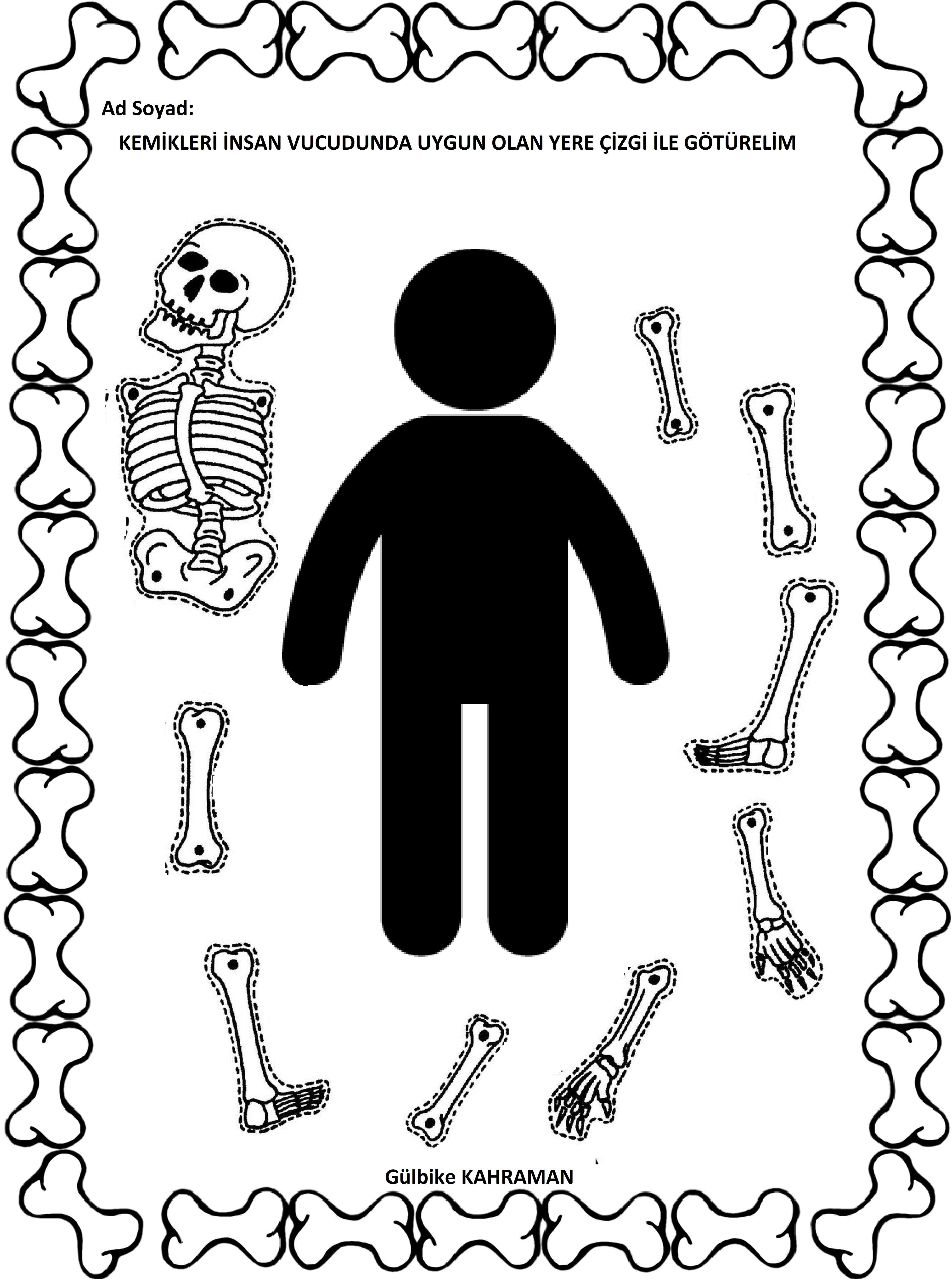 Okul Oncesi Iskelet Sistemi Okul Danismanligi
