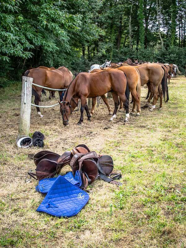 #BZH #Finistere, #Bretagne #cheval : polo à La Forêt-Fouesnant (5 photos) © Paul Kerrien http://toilapol.net
