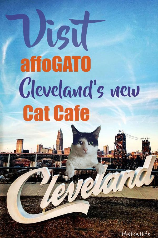 Fat Cats Tremont Reservations News Pets News And Review