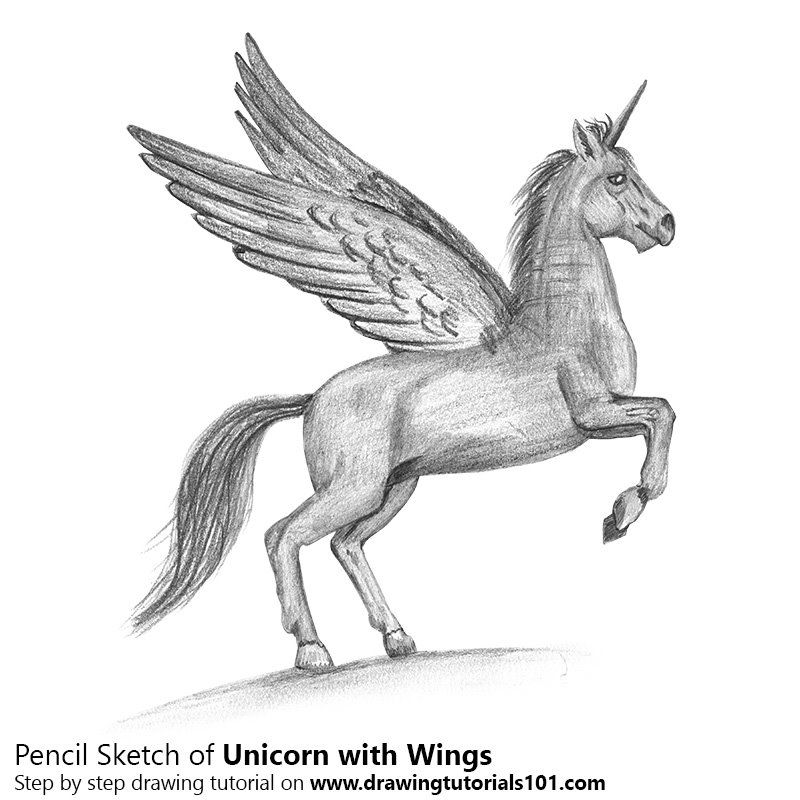 Pencil sketch of unicorn with wings pencil drawing