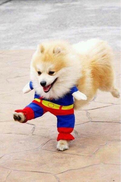 Resultado de imagen de carnaval perros monos