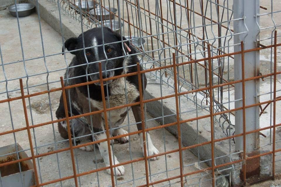 17+ Hope animal rescue durham ideas in 2021