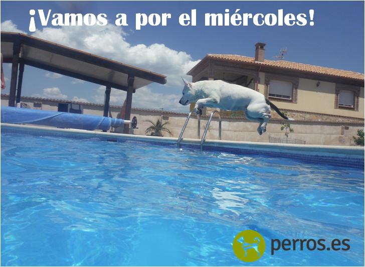 #perros #dog
