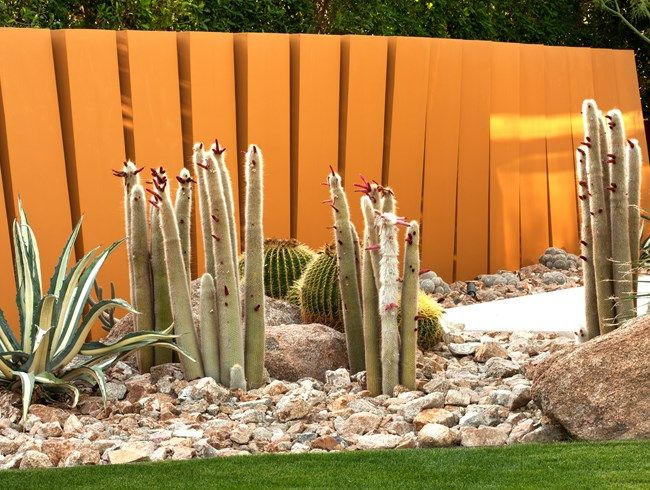 Cleistocactus Strausii (silver Torch), Echinocactus, Grusonii (golden  Barrel Cactus) Weeds And Walls, Photo Gallery Garden Design Calimesa, CA
