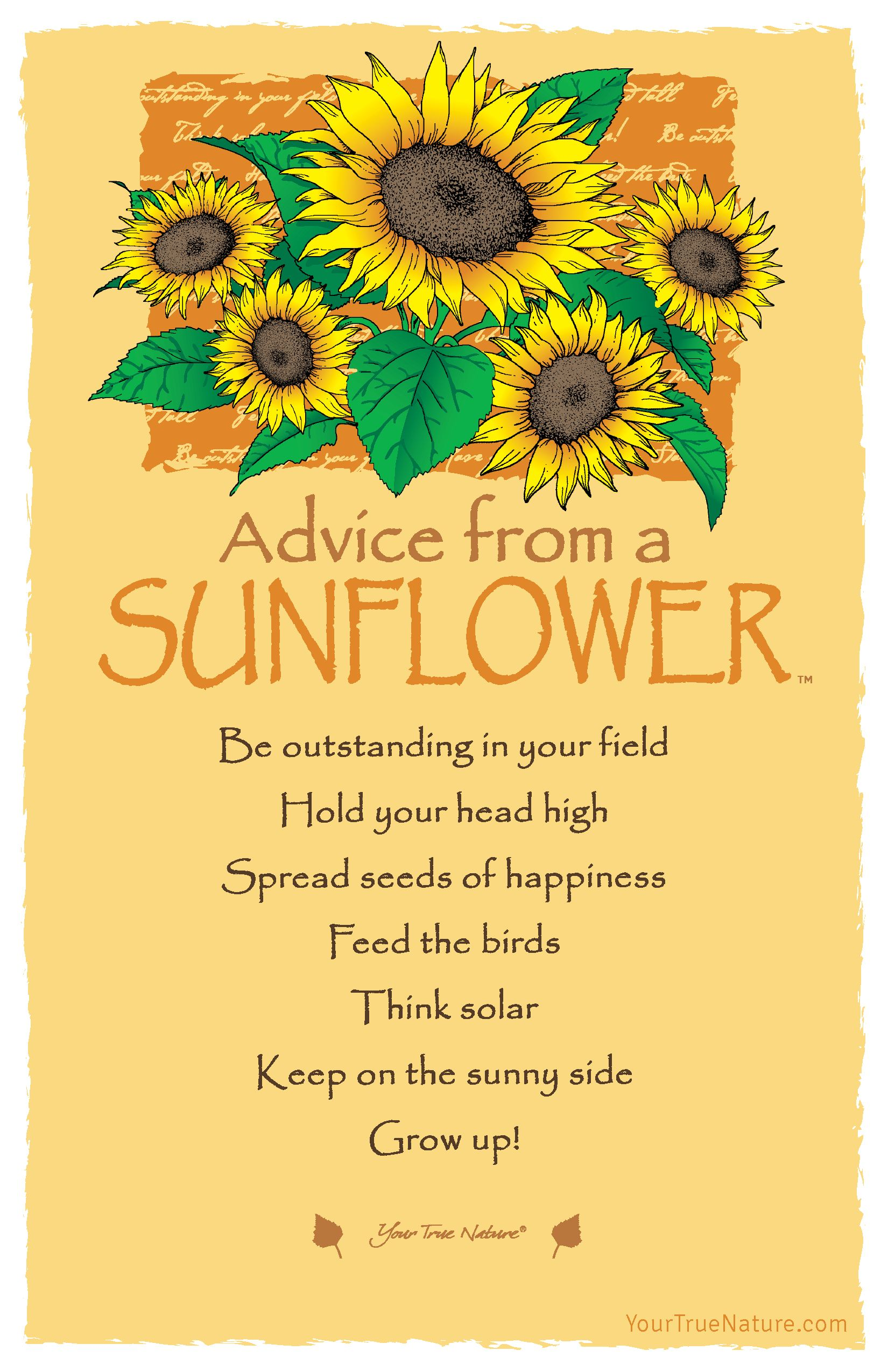 Keep On The Sunny Side Wedding Advice From A Sunflower Sunflowers Wedding Sunflower Quotes Flower Quotes Sunflower