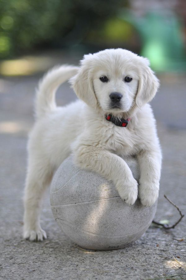 50 Lovely Puppy Pictures