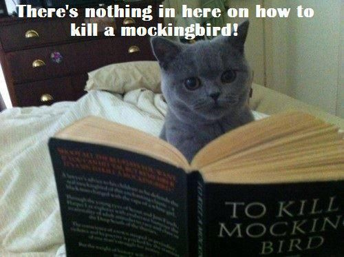Shouldn't a reading cat be smart enough to get the bird without the book?