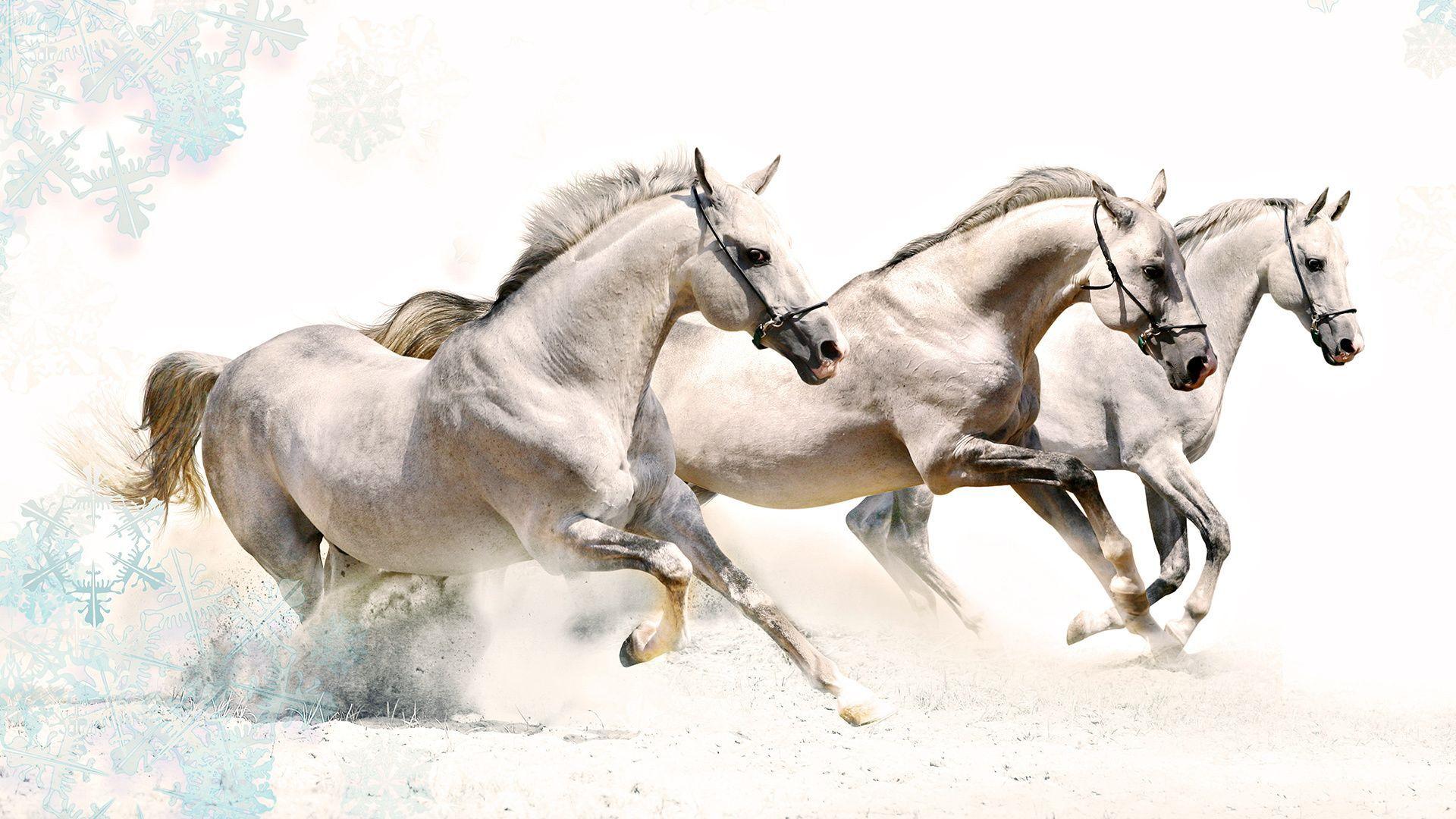 Running Horses Wallpaper Desktop Horses Run Horse Large Hd Horse Wallpaper Horses White Horses