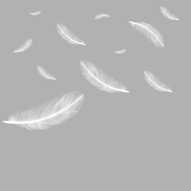 Floating Falling Feather Png Free Download Feather Clipart Feather Feathers Png Transparent Image And Clipart For Free Download Feather Falls Feather Background Feather Vector