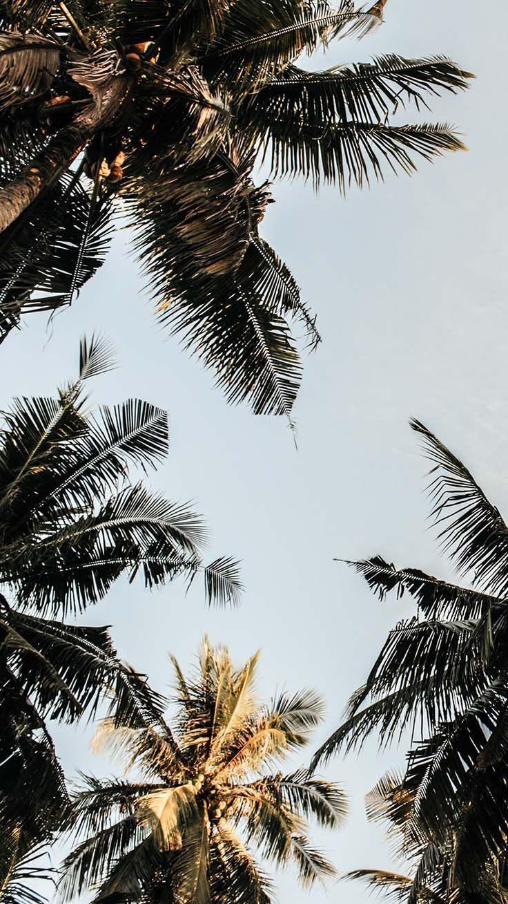 Lass uns gehen Kokosnüsse! Genießen Sie 10 tropische iPhone-Hintergründe! - #Kokosnüsse #Geni... #iphone3