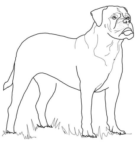 Bullmastiff Coloring Page From Dogs Category Select From 20946