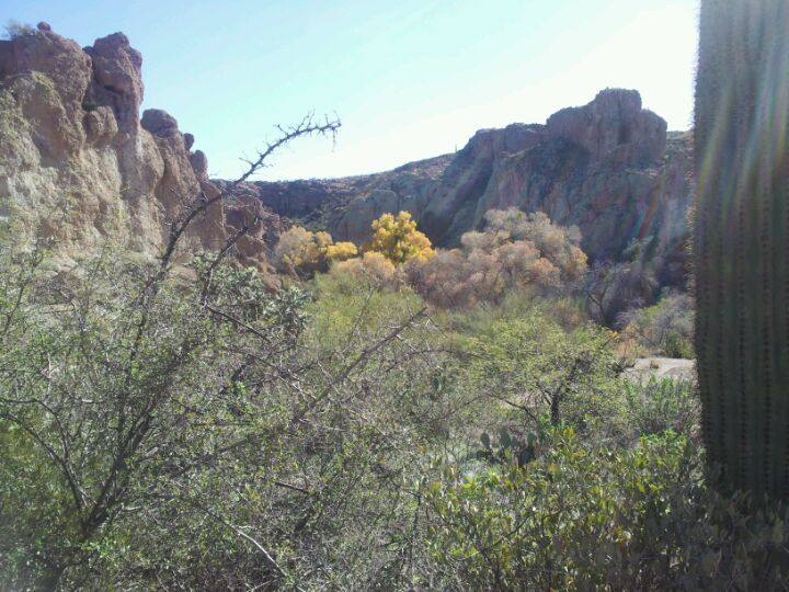 Boyce Thompson Arboretum State Park in Superior, AZ